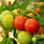 おいしいトマトの見分け方と栄養成分について
