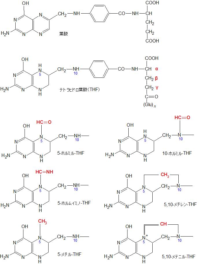 テトラヒドロ葉酸とその一炭素単位置換の葉酸類