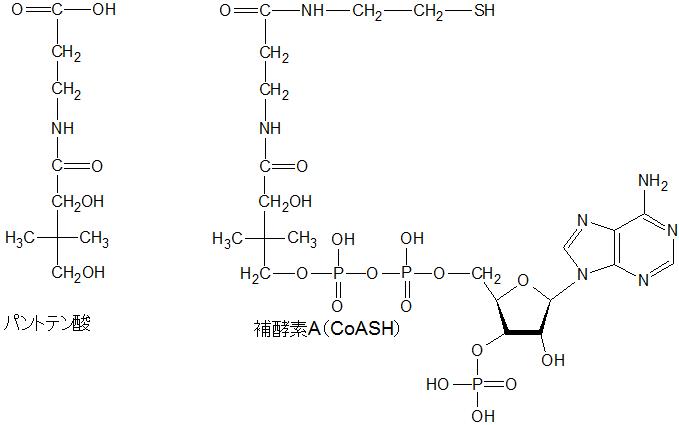 パントテン酸とCoA