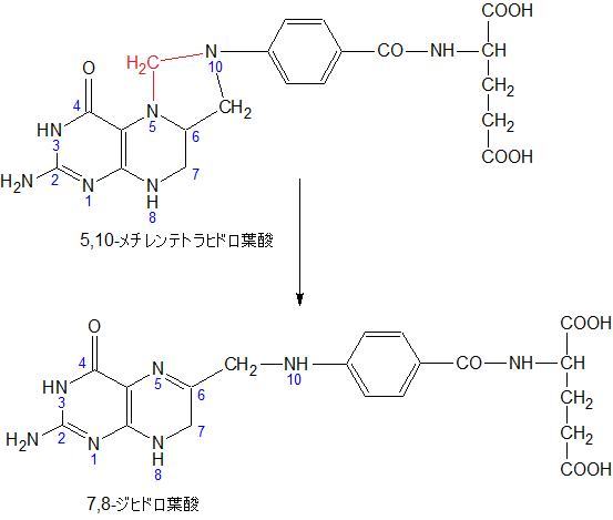 5,10-MethyenTHF to 7,8-DHF02