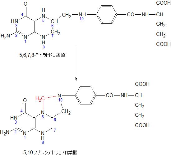 5,6,7,8-THF to 5,10-MethylenTHF