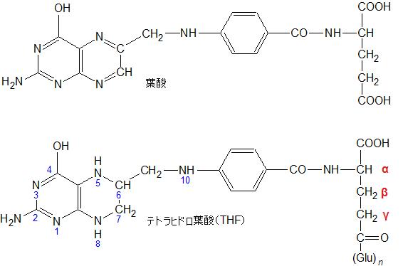 テトラヒドロ葉酸