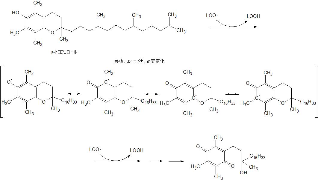 α-トコフェロール抗酸化