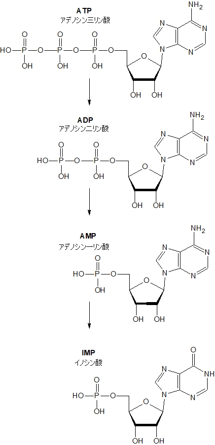 ATP分解