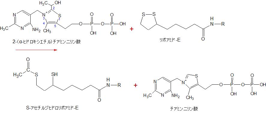 2-(alpha-Hydroxyethyl)thiamine diphosphate