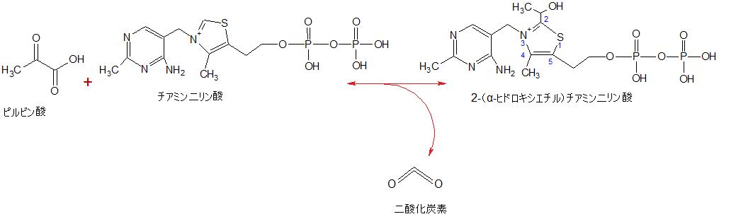 Pyruvate + Thiamin diphosphate