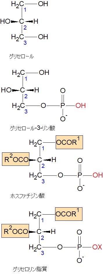 グリセロリン脂質