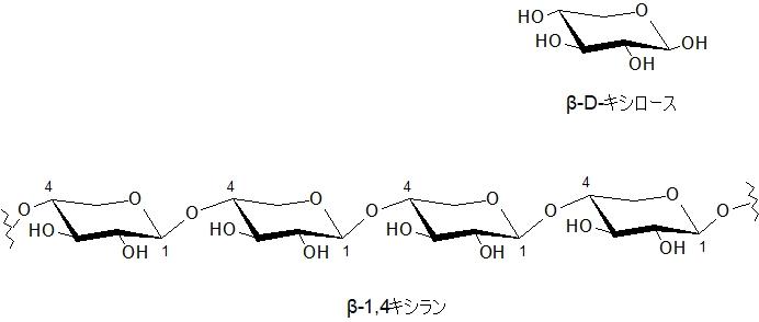 β-1,4キシラン
